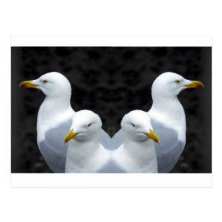 Gulls, Gulls, Gulls Postcard
