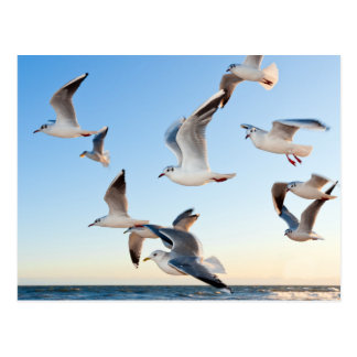 Gulls in flight postcard