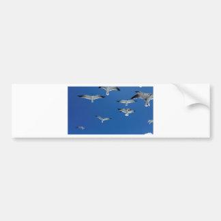 gulls in the sky bumper sticker