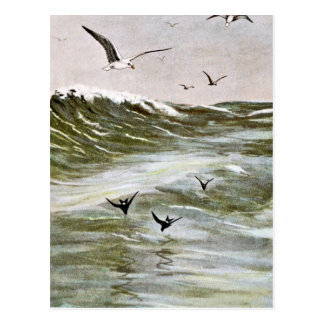 Gulls on The Ocean Postcard