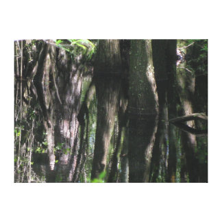 Gum Tree Reflectionss in the swamp Canvas Print
