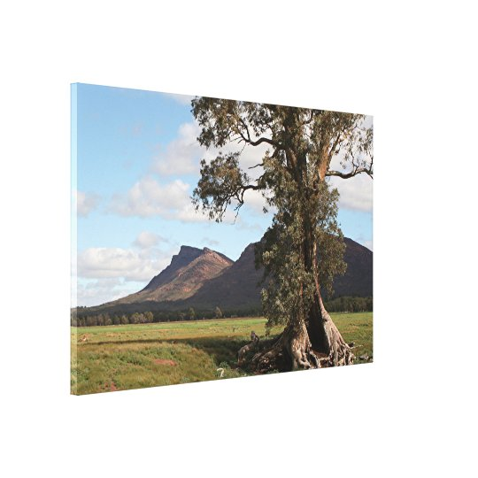 Gum tree & Wilpena Pound, Flinders Ranges Canvas Print
