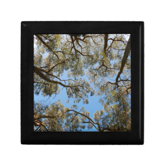 Gum Trees against a Blue sky Gift Box