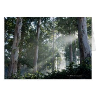 Gum trees (Eucalyptus) in rain forest Tokai Card