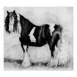 Gypsy Cob Horse Portrait Poster