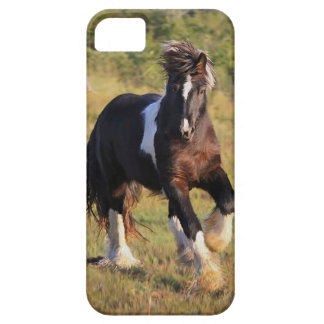 Gypsy Cob iPhone 5 Case