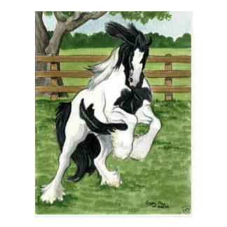 Gypsy Vanner at play Horse Art Postcard