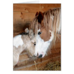 Gypsy Vanner Mare and Foal Mother's Day Greeting Card