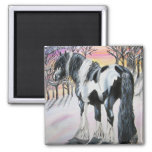 gypsy vanner square magnet