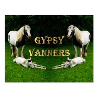 Gypsy Vanners Postcard