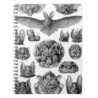 Haeckel Chiroptera Notebooks