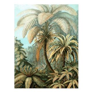 Haeckel Filicinae Postcard