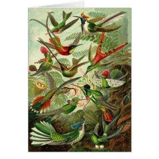 Haeckel Hummingbird Illustration All-Occasion Card