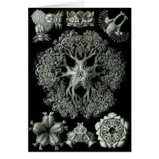 Haeckel Negative Card