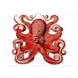 Haeckel Octopus Red Postcard