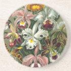Haeckel Orchidae Coaster