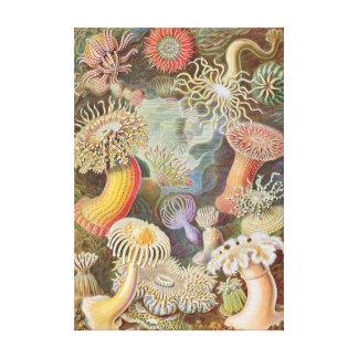 Haeckel Sea Anemones canvas print