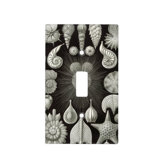 Haeckel Thalamphora Light Switch Cover