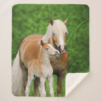 Haflinger Horse Cute Baby Foal Kiss Mum Pony Photo Sherpa Blanket