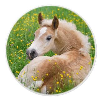 Haflinger Horse Cute Foal in Flowerbed Decorative Ceramic Knob
