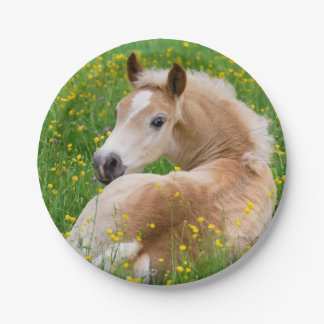 Haflinger Horse Cute Foal in Flowerbed Funny Party 7 Inch Paper Plate