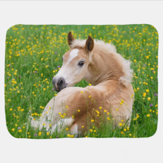 Haflinger Horse Cute Foal Resting Flowerbed, Baby Receiving Blanket