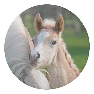 Haflinger Horses Cute Baby Foal With Mum Photo ; Eraser