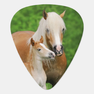Haflinger Horses Cute Foal Kiss Mum Photo Plectrum