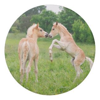 Haflinger Horses Cute Foals Friends Rearing Photo Eraser