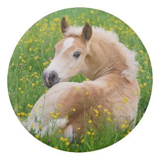 Haflinger Pony Horse Cute Foal in Flowerbed Photo Eraser