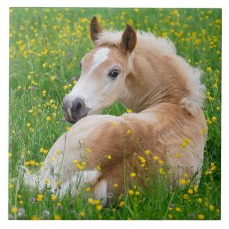 Haflinger Pony Horse Cute Foal in Flowerbed Photo Tile