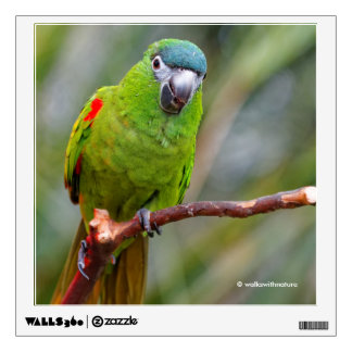 Hahn's Mini Macaw / Red-Shouldered Macaw Wall Decal