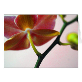 Haiku Orchid Card