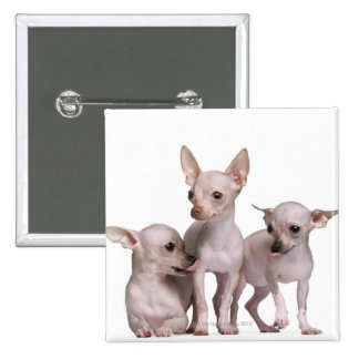 Hairless Chihuahua (5 and 7 months old) 2 Inch Square Button