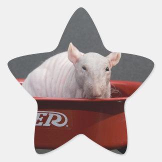 HAIRLESS RAT STAR STICKER
