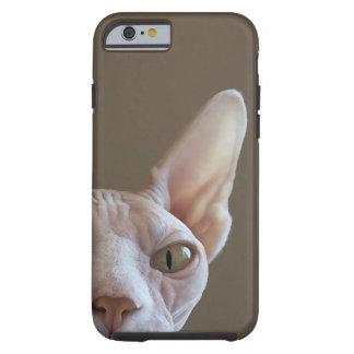 Hairless Sphynx Cat iPhone 6 case