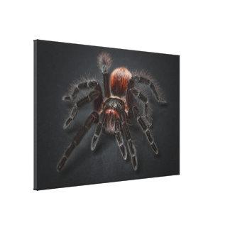 Hairy tarantula spider canvas print