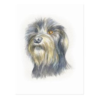 Hairy terrier postcard