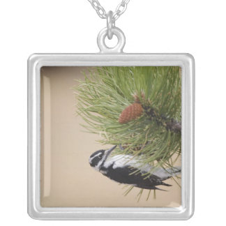Hairy Woodpecker, Picoides villosus, female Silver Plated Necklace