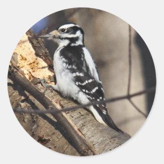 Hairy Woodpecker Round Sticker