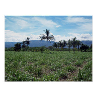 Haitian Countryside Poster