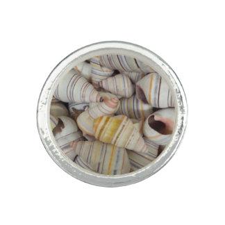 Haitian Tree Snail Shells Photo Rings