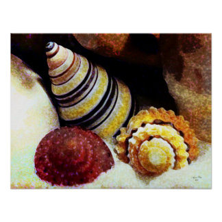 Haitian Tree Snail, Strawberry Top & Candy Shell Poster