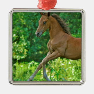 Half Arabian Colt Silver-Colored Square Ornament