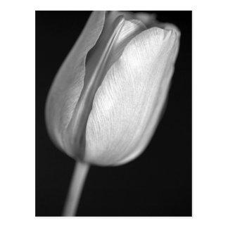 Halftone Tulip Postcard