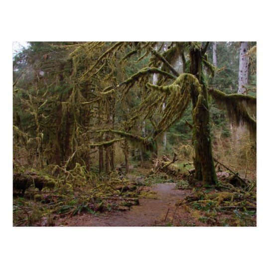 Hall of Mosses Postcard
