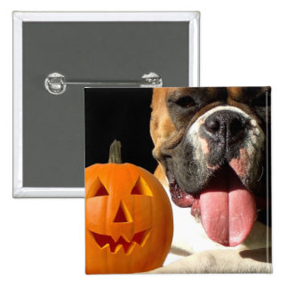 Halloween Boxer button