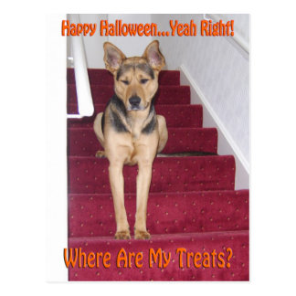 Halloween Dog and No Treats Postcard
