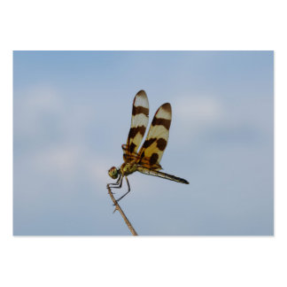 Halloween Pennant Pack Of Chubby Business Cards