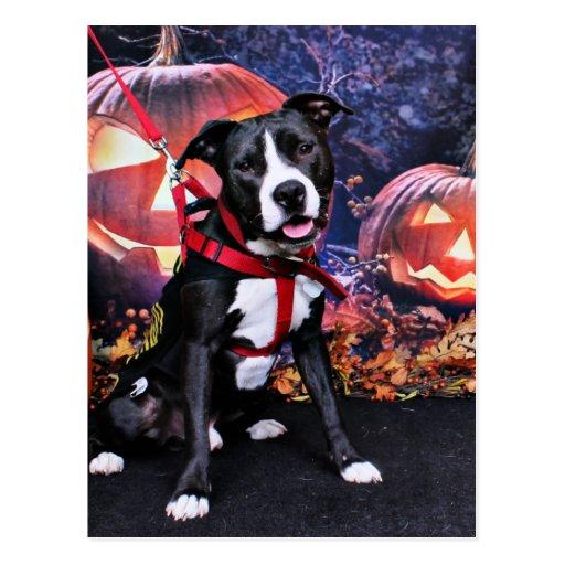 Halloween - Pitbull - Loki Post Cards